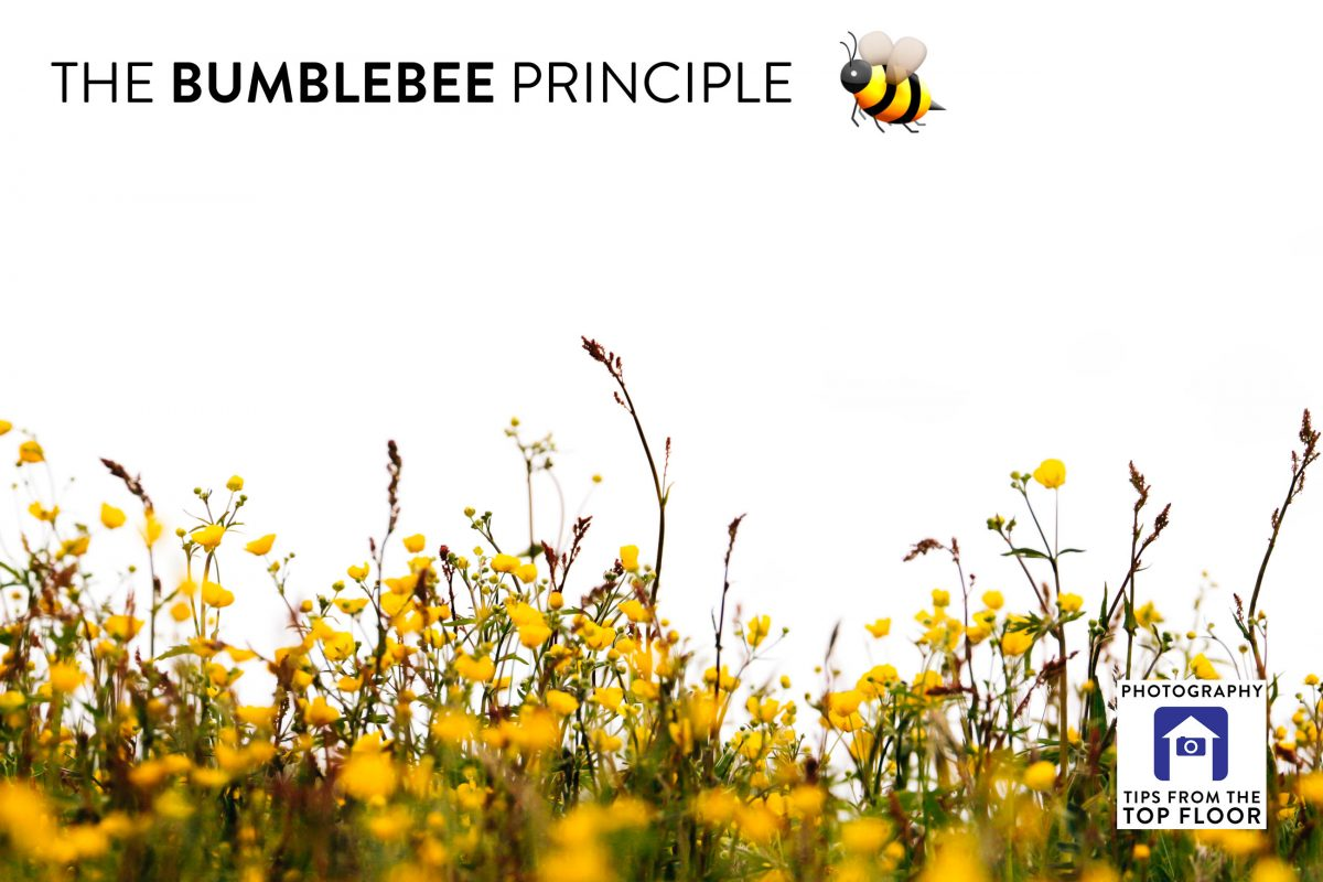 tfttf739 – The Bumblebee Principle